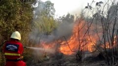 Un volontario interviene sul luogo di un incendio boschivo