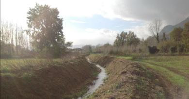 Il corso del fosso Nocione nella zona di Cassino, un piccolo corso d'acqua nella campagna, con un albero sulla sinistra