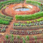 L'orto sinergico, dentro il cerchio della biodiversità