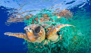 Una tartaruga marina impigliata in una rete da pesca in plastica