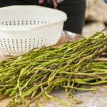 L'asparago, il diuretico dei ciociari