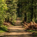 """Uomini e boschi. Una lunga e travagliata """"storia d'amore"""" secondo Alfonso De Nardo"""