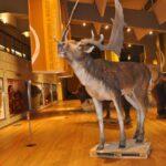 Una sala del Museo Nazionale del Paleolitico di Isernia